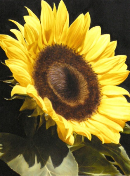 15-Sunflower-I-91-x-122
