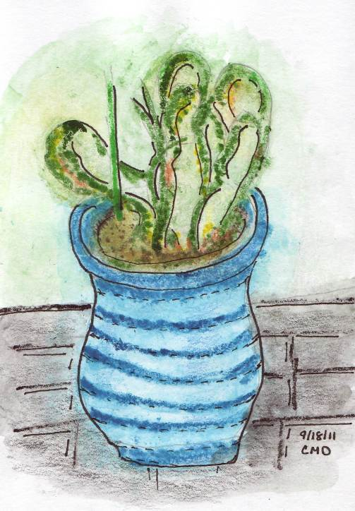 drawing of cactus in blue pot