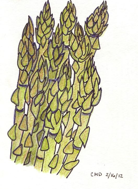 drawing of aspargus