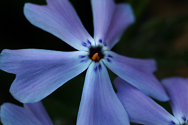 blue-pinwheel-thingie.jpg
