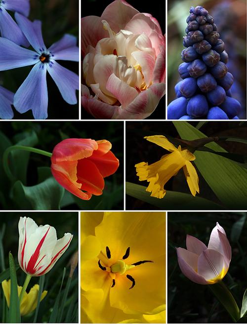 spring-collage.jpg