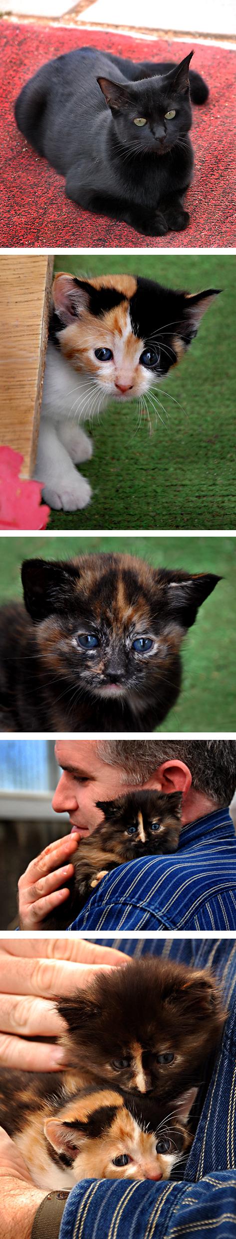 kittensforblog