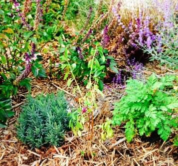 Fall garden 4