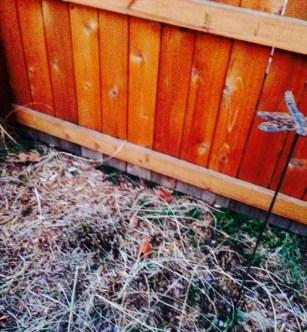 garden power stubble