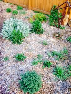 sacred well being garden 2