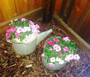 wildflowers impatiens