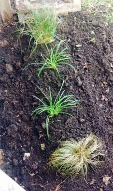Front Garden New Plants