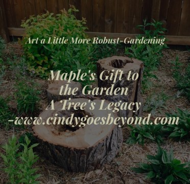 Maples Gifts to the Garden