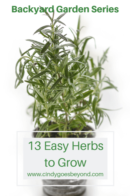 13 Easy Herbs to Grow