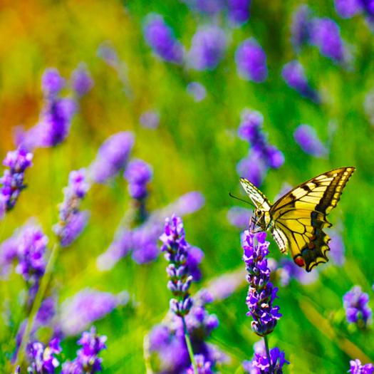 Create a Bee & Butterfly Garden