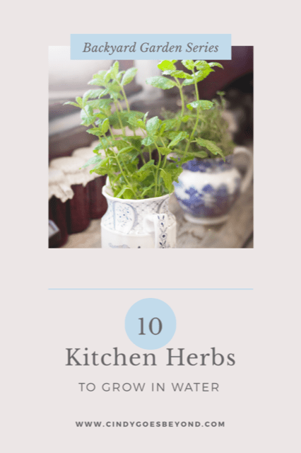10 kitchen herbs to grow in water title meme