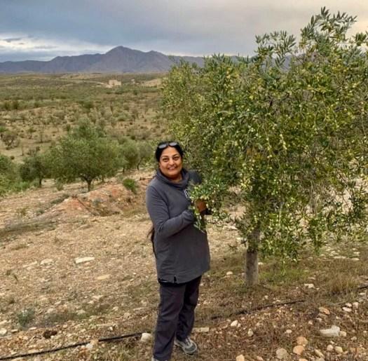 Nina's Olivar Almeria Gold Olive Oil grove
