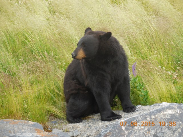 BLACKBEARROCK
