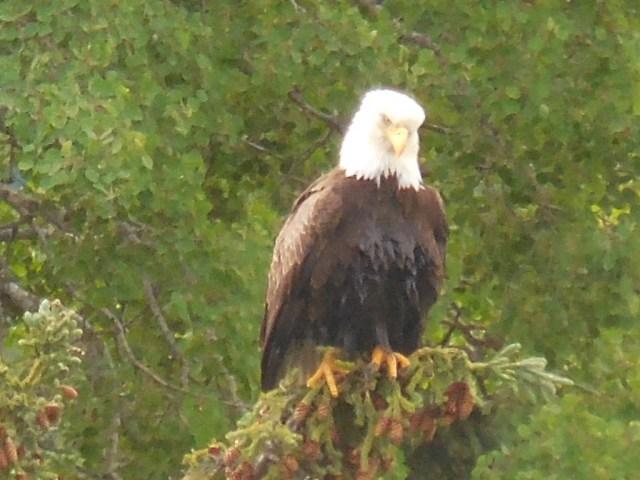 raft eagle