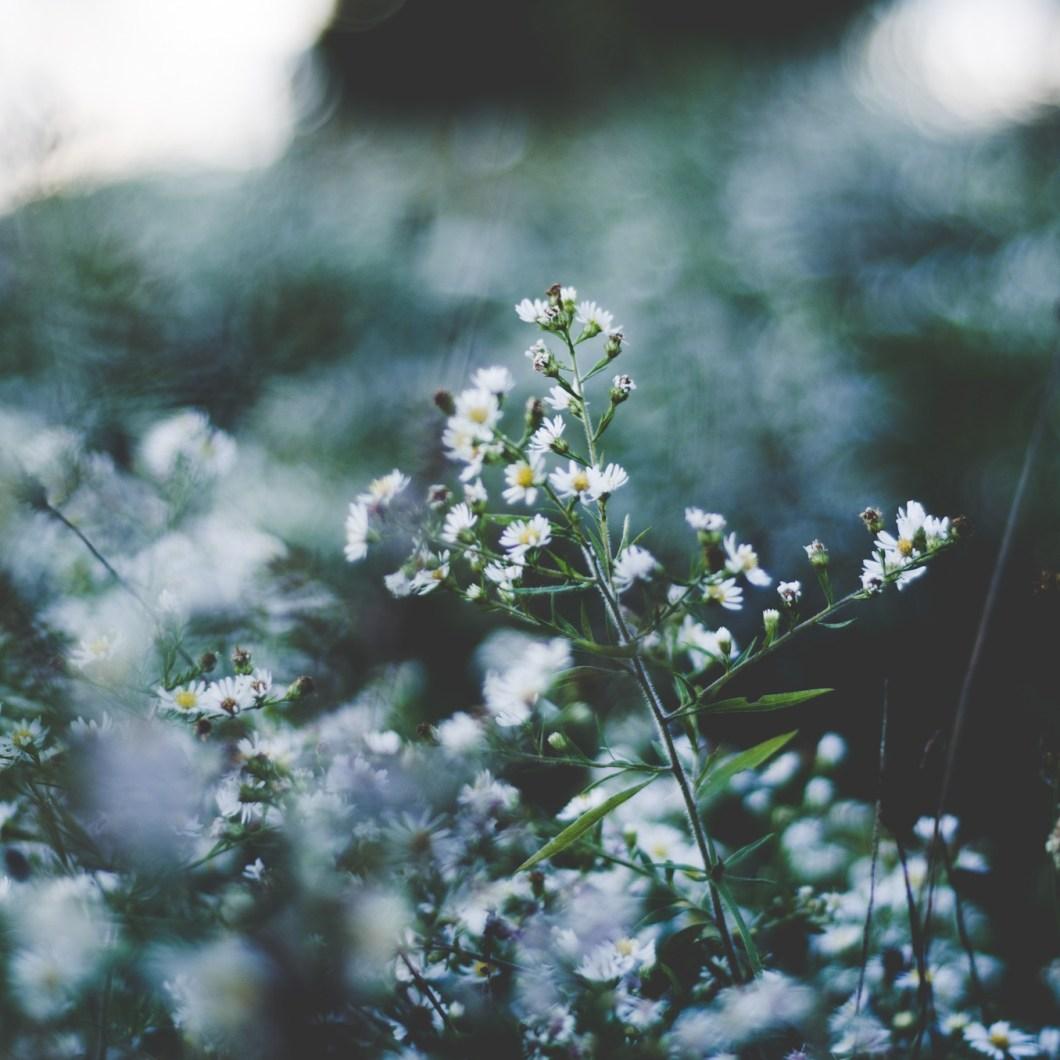 Bee Friendly Wildflowers