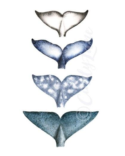 Four species Whale Tails