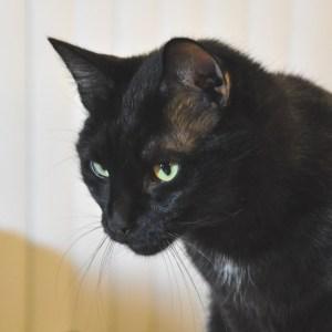 Fab Feline Friday: Sebastian