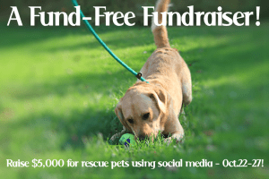 Tweet To Help Rescue Pets #BtC4A