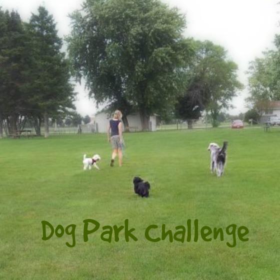 CindyLu-Dog-Park