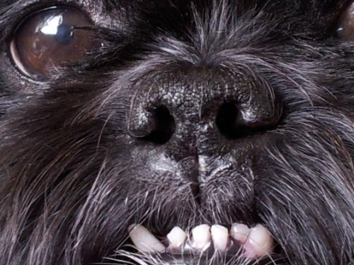 The Importance of Pet Dental Care: Caring for Critters Round Robin