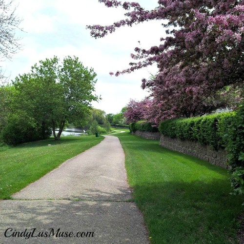 Spring blossoms along walkway