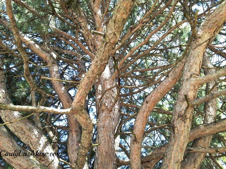 CindyLusMuse-Spirit-Tree-Looking-Up2