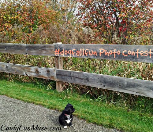 Fall Fence #dogfallfun