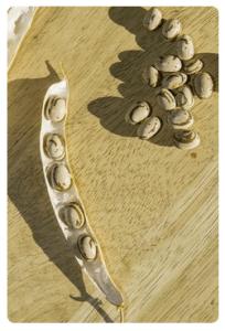 dried ojo de cabre beans