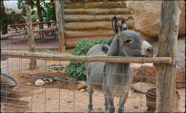 A hungry donkey.