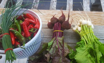 Peppers, turnips and radishes, oh my!