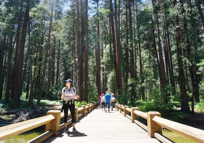 forest hikes through Yosemite national park California