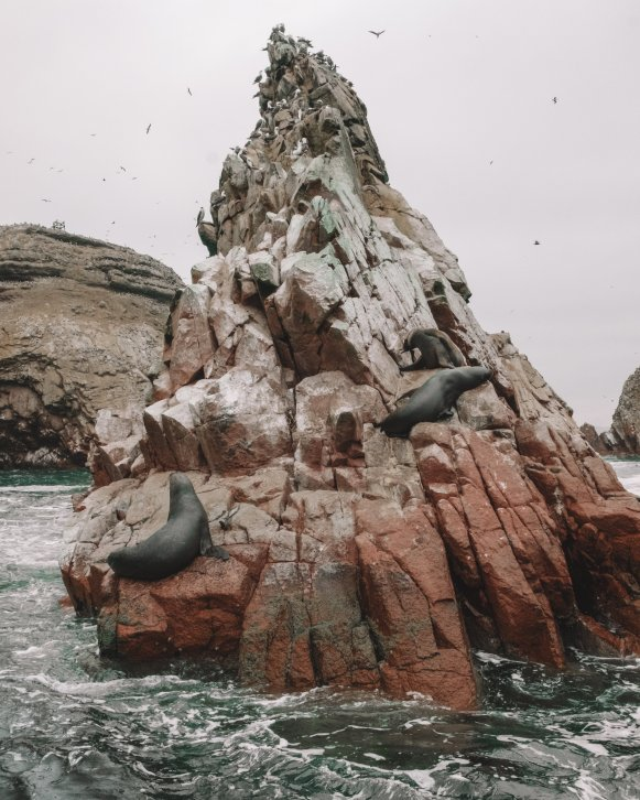 sea otters in Ballestas islands Peru