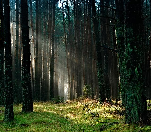 forêt pologne