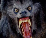 See Film Differently: 'An American Werewolf in London'…Zoo