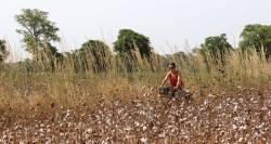 cinecicleta-Burkina-Fasso (62)