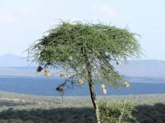 cinecicleta-kenia-II (10)