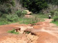 Guinea-Bissau (14)