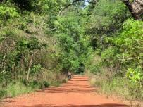 Guinea-Bissau (15)