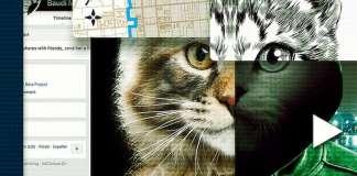 A los gatos ni tocarlos (2)