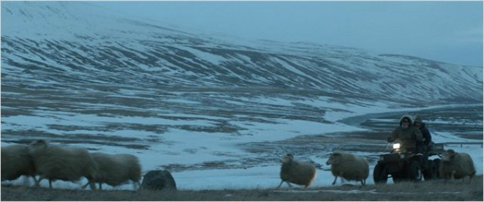 ovelha negra fotografia