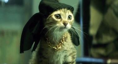 keanu kitten do rag (380x206)
