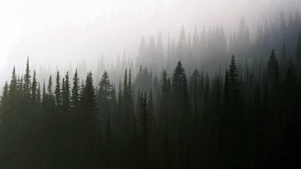 fog-trees-background.jpg