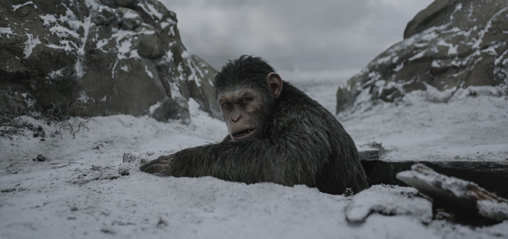 Slanted Review: War for the Planet of the Apes
