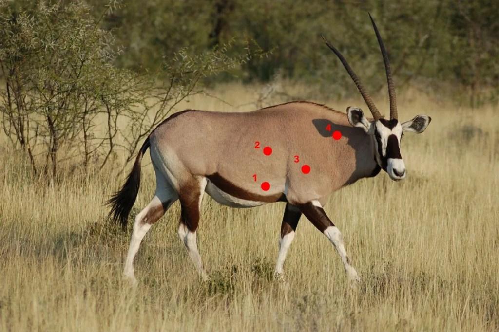 JEU Le Tir Parfait - Oryx par Cinématir, Simulateur de chasse
