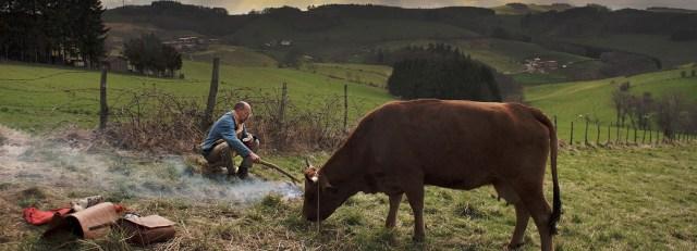 la-vache