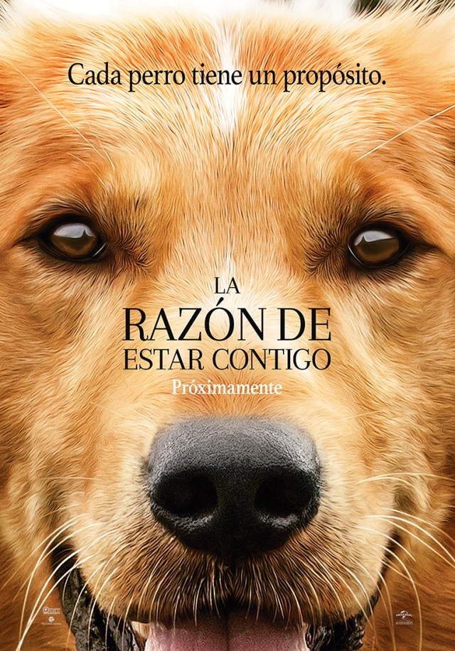 Dogs_Purpose_Teaser_Alta.jpeg