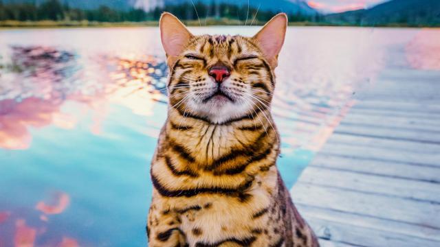 #cats_the_mewvie.jpg