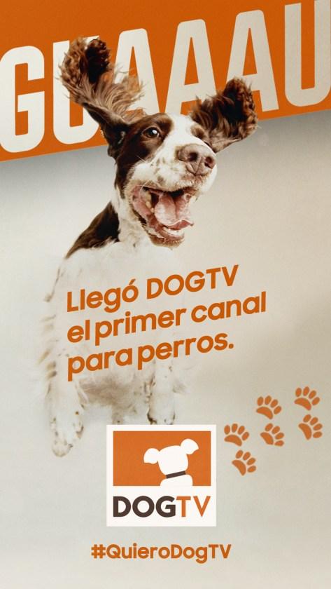 dogtv canal para perros