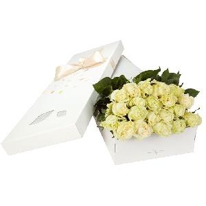 Trandafir alb cutie