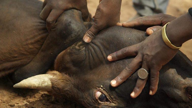 Los fulani tienen una relación muy profunda con los animales
